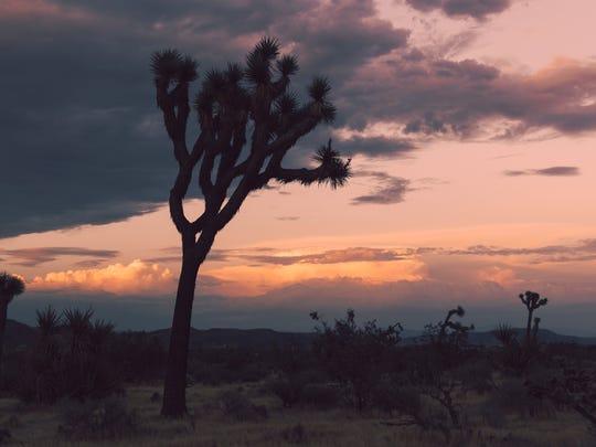 A sunset during monsoon season in Joshua Tree