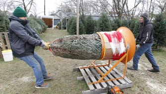 Ron Ivanis (right) and a helper, put a tree in netting for a customer at Sanfelippo Trees on S. 27th St.
