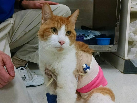 cat recovering