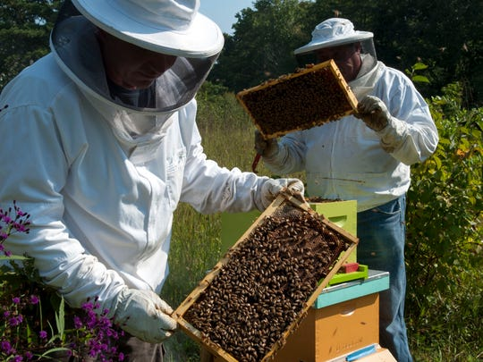 With bees buzzing around their heads, Rob Payton, left and Doug Slocum check brood frames for honey in this 2013 file photo.