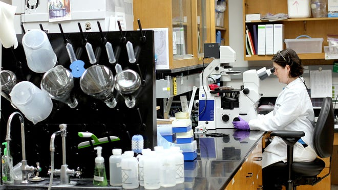 A worker collects data at a laboratory inside the Sid Martin Biotech incubator in Alachua.