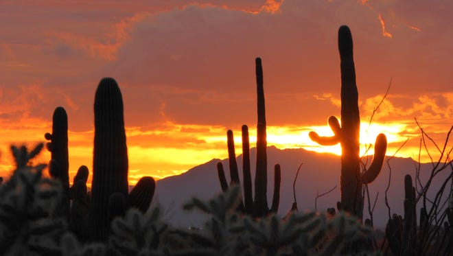 Day turns to night in a fiery display in this winter sunset photographed by Dan Laakso at Usery Mountain Regional Park.