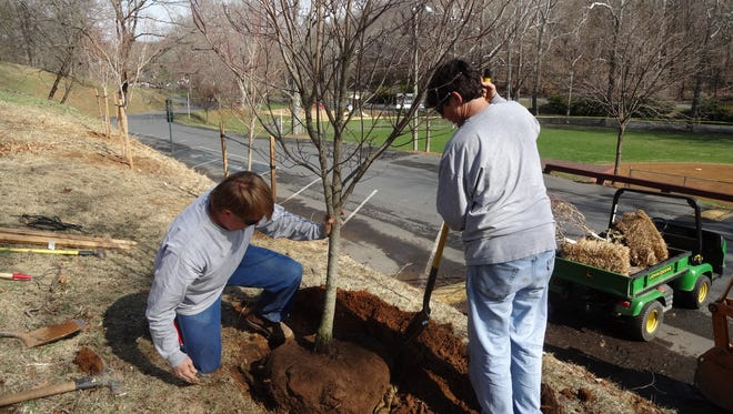 Matthew Sensabaugh and Terry Bonner plant a dogwood tree at Gypsy Hill Park in 2014. Sensabaugh is the city horticulturalist for Staunton, and Bonner is the assistant horticulturalist.