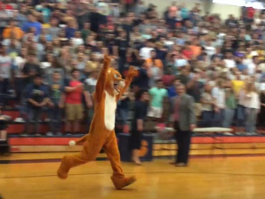 """The Dickson County High School Cougar mascot runs into the DCHS gym during a morning celebration of the school and district making an overall """"5"""" in state testing."""