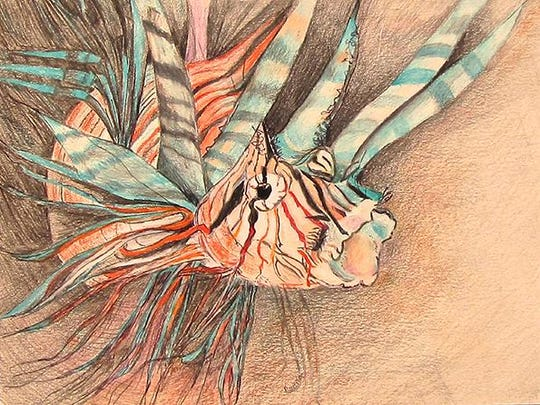 "Colored pencil drawing of a lion fish by Pat Smith, part of the ""Scandia Friends and Family"" exhibit at Meadows Art Gallery."