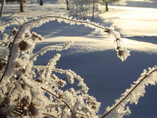 The frost on vegetation makes for pretty photos.