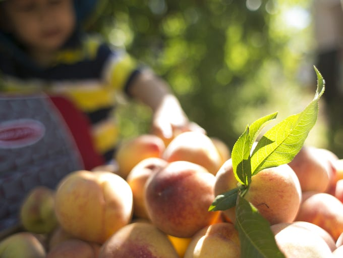 5/21-22: Peach Festival: Celebrate over 50 years of