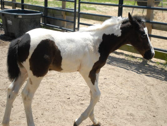 Beebe Ranch9
