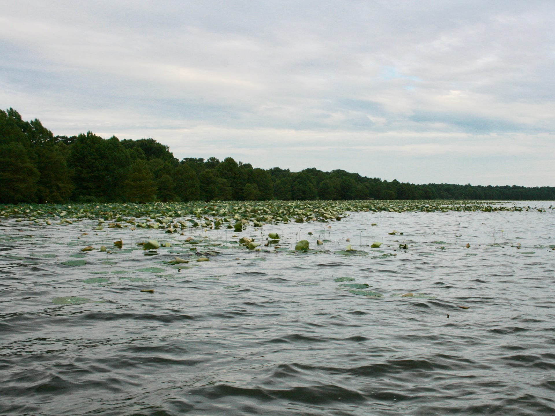 Fishing for catfish on Tennessee's Reelfoot Lake