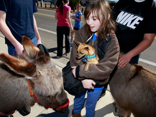 Sarah Padgett, 10, and her Chihuahua Gabriel visit with a couple of miniature donkeys during the A Fair of the Heart and Goosebump Race on Feb. 13, 2016, near the San Juan Regional Medical Center. The event returns this weekend.