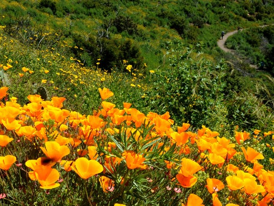 Wildflowers-in-bloom-5.jpg
