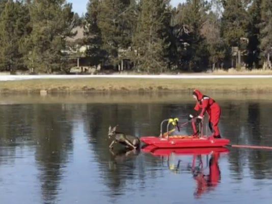 Ice Rescue Deer