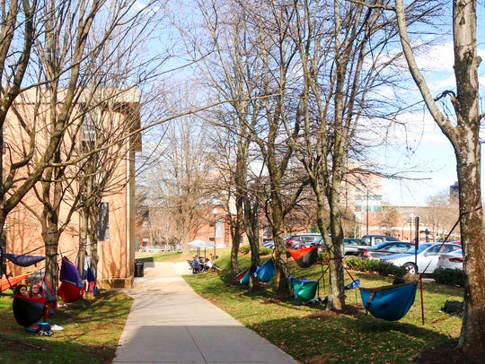 Dozens of hammocks cradling students are sprawled across the UT campus.