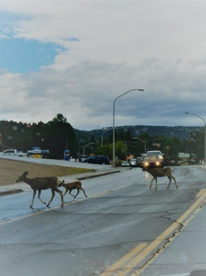 Deer take the right-of-way crossing Mechem Saturday morning.