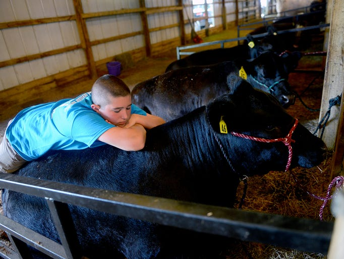 Ty Mott, 13 of Eaton Rapids, lays on Ford, a Simmental