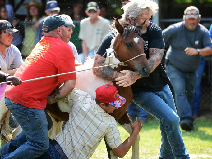 Saltwater Cowboys try to control an uncooperative Chincoteague Pony during the 89th annual Chincoteague Pony Auction in Chincoteague, Va. A portion of the wild pony herd is auctioned off each year to benefit the Chincoteague Volunteer Fire Company, which owns and maintains the herd.