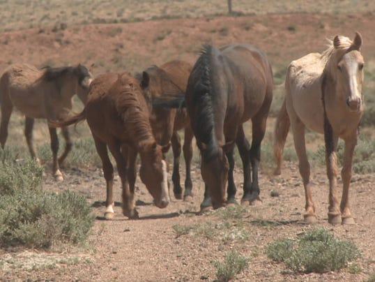 Wild horses 02a