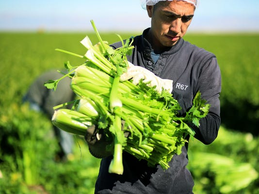US-ECONOMY-MIGRANTS-FARMING