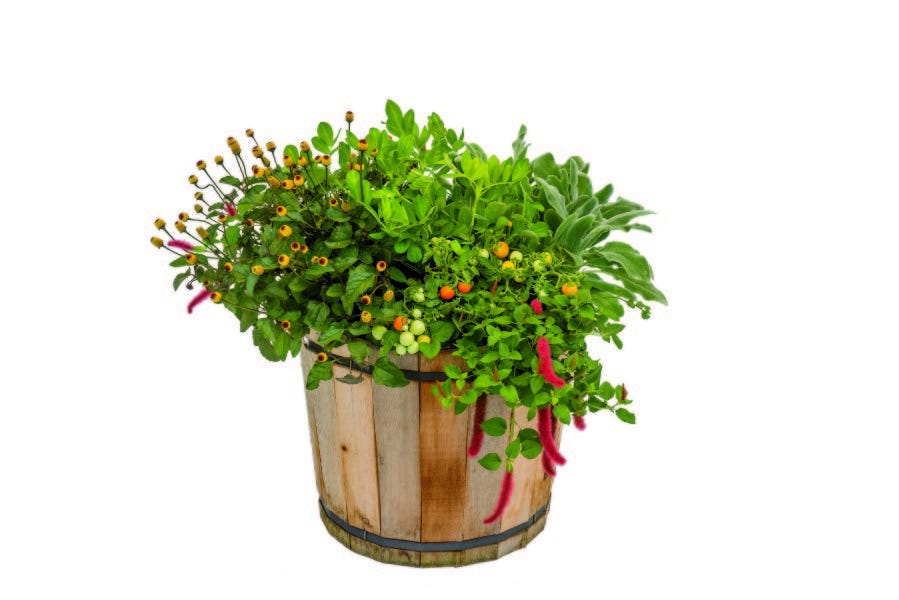 ID\u003d90885648  sc 1 st  Knoxville News Sentinel & Pretty posies: \u0027Container Theme Gardens\u0027 author shares how to keep ...