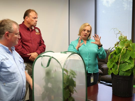 Ken Gioeli, from left, Matt Phillips and Carey Minteer talk about air potato leaf beetles with air potato vines displayed for a media brief from the offices of the Department of Environmental Protection on Thursday. Leon County will be giving away the bugs Friday to help residents stem the invasive vines.
