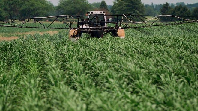 Agriculture crop