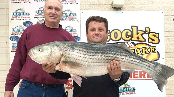 "Wieslaw Czajka caught his first striper fishing on his friends 14' boat in the back bays of Brigantine, NJ. It was 40"" and weighed 23 lbs. The back bays continue to give up nice bass. 11/18/15."
