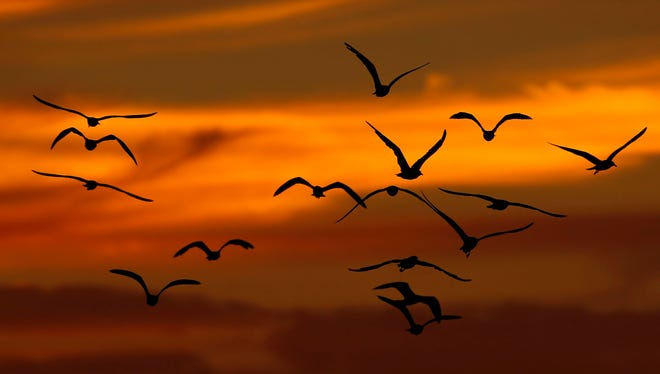 Birds fly while the sun sets Sunday, Sept. 7, 2014, in Philadelphia. (AP Photo/Matt Slocum)