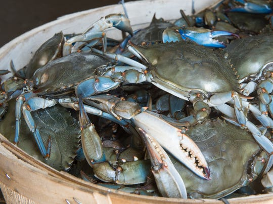 A view of a bushel of crabs at Southern Connection Seafood in Crisfield on Thursday, April 20, 2017.