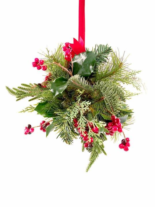 Mistletoe Ky Native Plant With A Long Resume