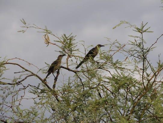 El área de restauración de hábitats de Río Salado en
