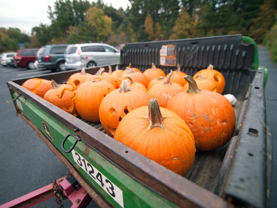 Carved pumpkins are prepared to be transported into