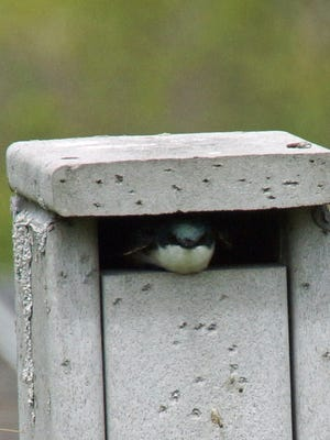 Marsh Haven Nature Center will hold a nest box hike from 6 to 7 p.m. Thursday, June 14.