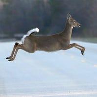Deer season opener sees hunters hitting the woods, fields today in Michigan