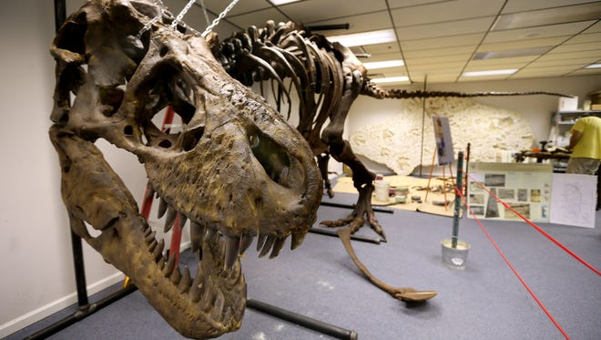 The Earth Experience: The Middle Tennessee Museum of Natural History features a cast of a T-Rex skeleton.