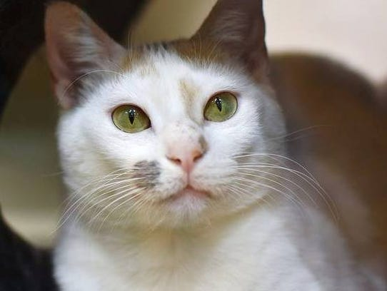 Eva is thefeatured cat for this week at Tabby's Place.