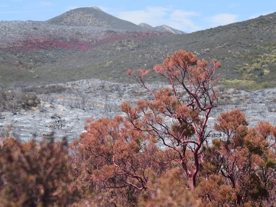 Pink retardant covers brush in the foreground and in the distance near the burn area of the Anza Fire on Tuesday.