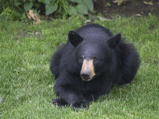 DRY WEATHER-NUISANCE BEARS