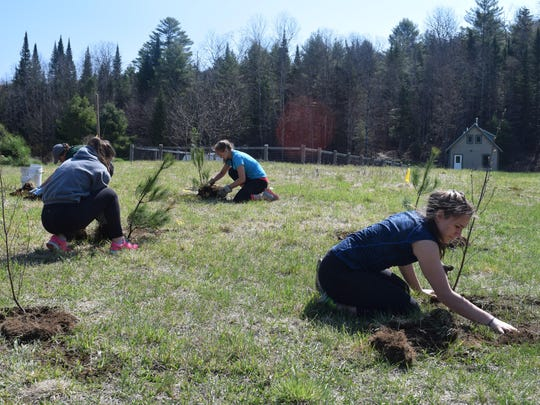 Members of Friends of the Winooski River plant trees and shrubs along the Winooski River.