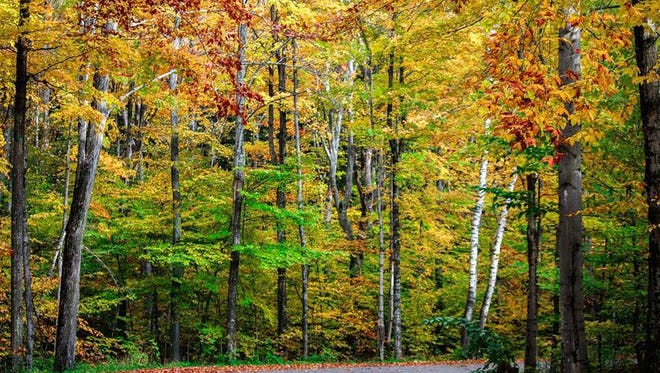 Door County residents and visitors submitted their favorite fall color photos for others to enjoy.