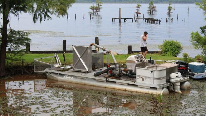 The construction of a barge to mechanically remove salvinia from Lake Bistineau is currently underway.
