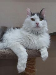 Griffin is available for adoption at Sun Cities 4 Paws,