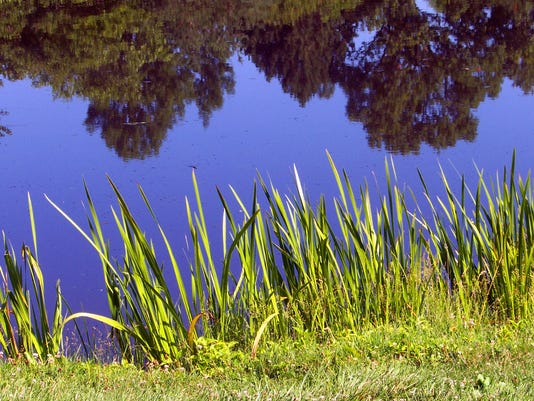 636650079831385647-pond-and-weeds.jpg