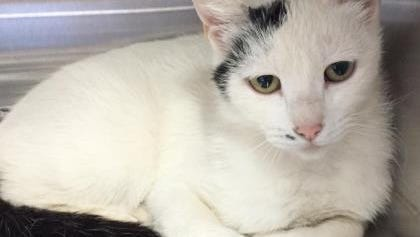 Pet of the Day: Ursula