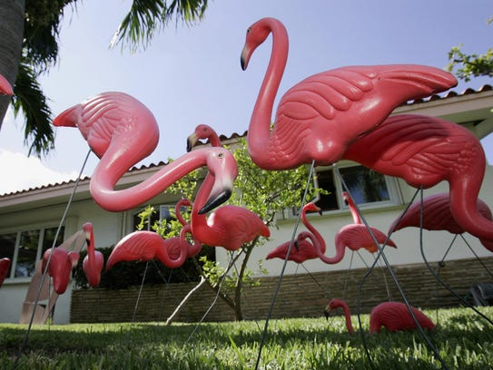 Plastic pink flamingos from Union Products, of Leominster, Mass., are displayed in a yard.