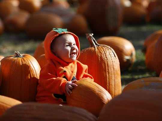 Pumpkin patches are great for the whole family.