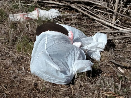 A Tulare County woman said over the last five months she's come across at least 10 dead animals dumped along Myers Avenue in Exeter.