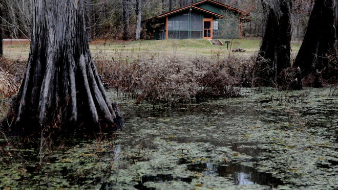 Salvinia moves in around a cabin at Lake Bistineau State Park.