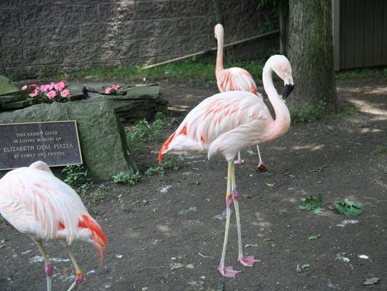 Flamingoes grace the grounds at Cape May Zoo in Cape