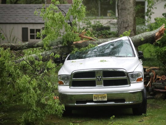 A large tree fell on this pickup truck in Washington