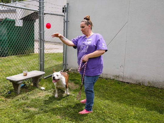 Kennel attendant Carrie Fleener of Ankeny exercises a dog at the  Animal Rescue League on SE 14th Street, June 8, 2016, in Des Moines, Iowa.